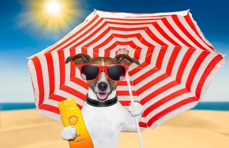 17355372 - dog at the beach under red and white umbrella with sunscreen